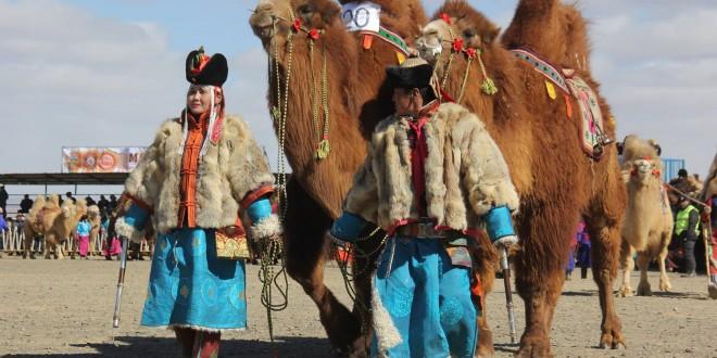 """""""Монгол тэмээ-999"""" арга хэмжээний сайхан хос шалгарлаа"""